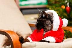 恶意嘘声欢乐画象在圣诞老人服装 库存照片
