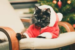恶意嘘声欢乐画象在圣诞老人服装 免版税库存照片