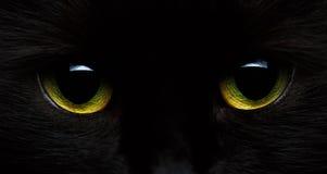 恶意嘘声的黄绿眼睛 库存图片
