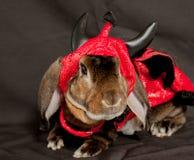 恶魔兔宝宝 库存图片