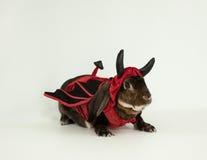 恶魔兔宝宝 库存照片