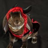 恶魔兔宝宝 图库摄影