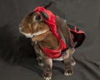 恶魔兔宝宝 免版税库存照片