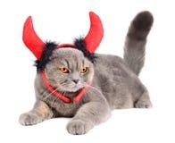 恶魔猫 库存图片