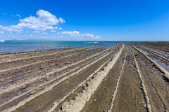 恶魔` s洗衣板海岸线和海滩在Aoshima海岛, Miyazak 图库摄影