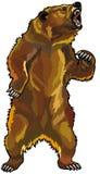 恼怒的北美灰熊 免版税库存照片
