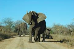 恼怒的大象 免版税库存图片