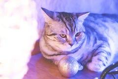 恼怒的新年猫 库存照片