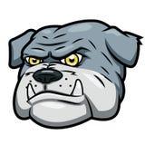 恼怒的牛头犬 免版税库存照片
