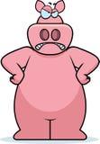 恼怒的猪 库存图片