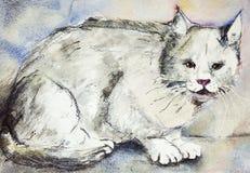 恼怒的猫灰色 免版税库存照片