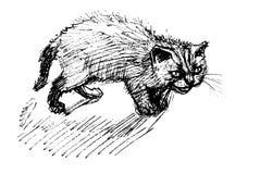 恼怒的猫 库存例证