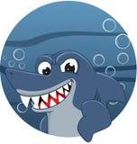 恼怒的鲨鱼 图库摄影
