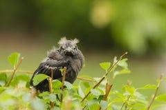 恼怒的bird.close驼鸟表面 库存照片