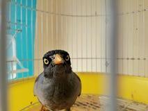 恼怒的bird.close驼鸟表面 图库摄影