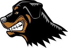 恼怒的Rottweiler 免版税库存图片