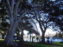 悉尼港桥的看法通过树 库存照片