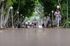 悉尼,澳大利亚- 2014年11月26日:有人的悉尼海德公园走道 低角度 免版税库存照片
