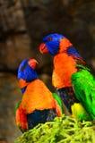 悉尼水族馆&野生人生的五颜六色的鸟 库存图片