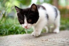 悠闲猫 免版税库存图片