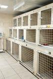 患者的兽医医院细胞 宠物医疗保健概念 库存照片