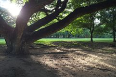 您感觉更小或大的树 图库摄影