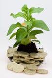 您生长方法的货币 免版税库存图片