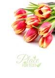 您的春天设计的边界元素与红色有条纹的郁金香iso 库存图片