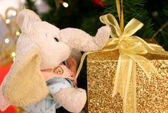 您的礼物!拿着金子闪烁有金丝带弓的一个逗人喜爱的大象玩偶礼物盒 库存照片