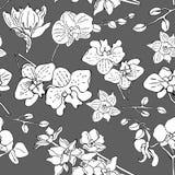 您的设计的花卉无缝的背景 向量例证