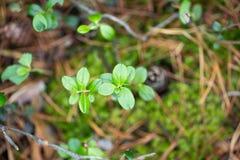 您的设计的绿色植物 免版税库存图片