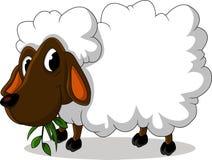 您的绵羊动画片设计 库存照片