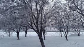 您背景秀丽设计庭院多雪的冬天 在结构树的雪 免版税库存照片