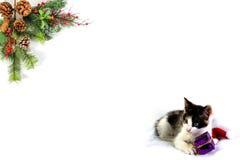 您自己的词的圣诞节空白 免版税库存图片