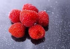 悬钩子属植物illecebrosus,日本莓 库存照片
