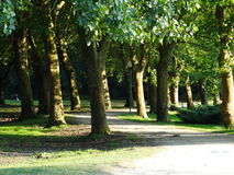 悬铃树和一棵白杨树在公园 免版税库存照片