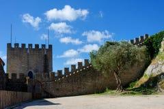 悬铃树在一座古老城堡的庭院里 库存照片