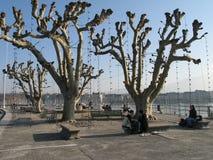 悬铃树在冬天 免版税库存图片