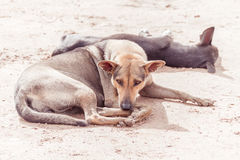悲伤有来历老可怜和病的街道的狗- 图库摄影