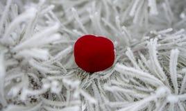 情人节、猩红色心脏谎言在一个杉木分支在霜和雪 免版税库存照片