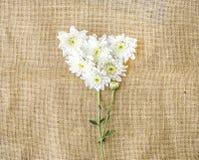情人节心脏由白色菊花制成在帆布backg 免版税库存照片