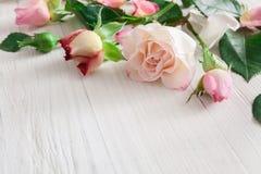情人节背景,在白色木头的玫瑰色花 免版税库存图片