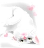 情人节贺卡的白色猫 免版税库存照片