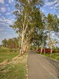 情景在喜马偕尔省 免版税图库摄影