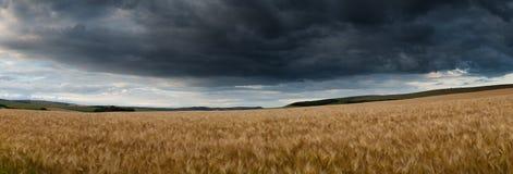惊人的乡下全景风景麦田在夏天su 免版税库存图片