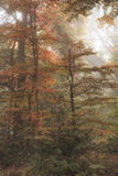 惊人的五颜六色的充满活力的形象的秋天秋天有雾的森林lan 库存照片