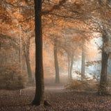 惊人的五颜六色的喜怒无常的充满活力的秋天秋天有雾的森林landsca 免版税库存图片