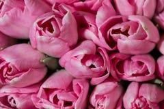 惊人的五颜六色的春天花束郁金香特写镜头 背景花园福禄考工厂 免版税库存图片