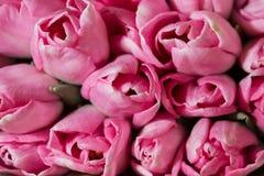 惊人的五颜六色的春天花束郁金香特写镜头 背景花园福禄考工厂 库存照片