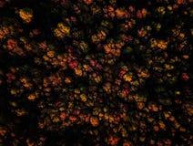 惊人的五颜六色的秋天秋天森林寄生虫视图日落的 免版税库存照片
